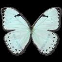 Mint-Morpho icon