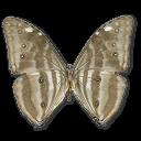 Morpho-Adonis-Huallega-Bottom icon