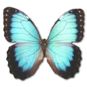 Morpho-Peleides-Montezuma icon