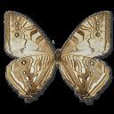 Morpho-Sulkowski-Underside icon