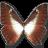 Morpho-Phano-Blue icon