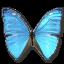 Morpho-Adonis-Huallega-Top icon
