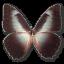Morpho-Telemachus icon