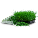 Wheatgrass-tray-bag icon