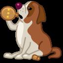 Dog-saint-bernard icon