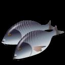 Fish-Dorada icon