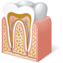 Body-Tooth-Anatomy icon