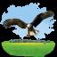 Animals-Eagle icon