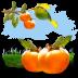 Fruits-Persimmon icon