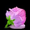Box-22-Rose-Pink icon