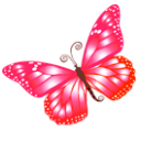 Butterfly-pink icon