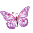 Butterfly-purple icon