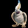 Nigel icon