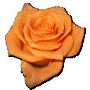 Rose-orange-2 icon