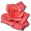 Rose-Coral icon