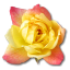 Rose-Yellow-2 icon